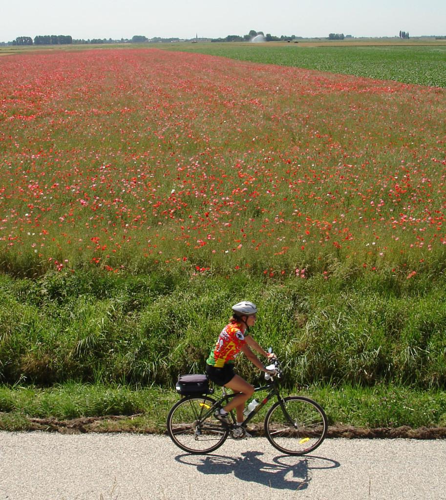 single traveler holland cyclist group holiday