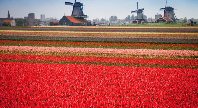 Cycle Tours Europe Tulips